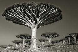 Ancienttreesbethmoon9